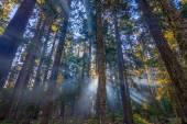 Rayos del sol brillando a través de la niebla de la mañana. — Foto de Stock