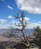 View from the North Rim of the Grand Canyon. — Stockfoto