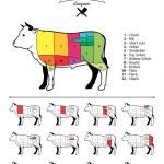 American (US) Beef Cuts Diagram — Stock Vector #68777963