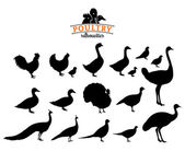 Poultry Silhouettes Isolated on White — Wektor stockowy