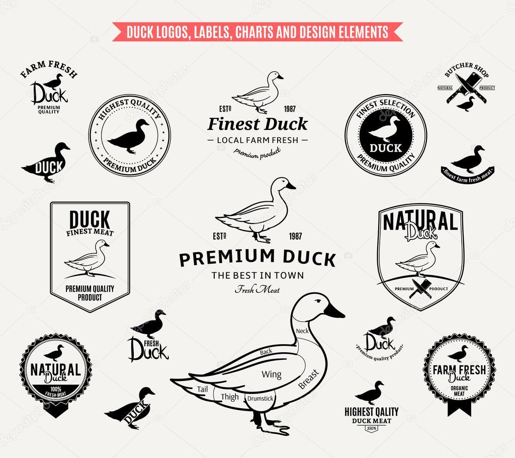 logo design label design  Diseño gráfico  Illustrator