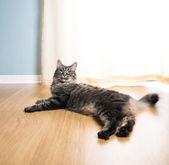 Cat relaxing on the floor — Foto de Stock