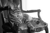 Cat on red velvet chair — Stock Photo