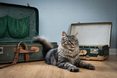 Travelling with your cat — Stock fotografie