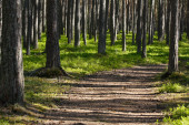 Trail in the estonian forest — Stock Photo