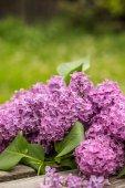 紫の花 — ストック写真