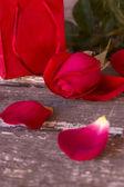 валентина розы — Стоковое фото