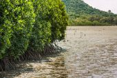 Mangrove forest at Kung Kra Ben gulf — Stock Photo