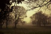 Early morning, golden mist, silhouettes of leafless trees — Stock Photo