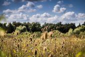Field of teasels on sunny day — Stok fotoğraf