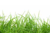 Fresh green gras — Stock Photo