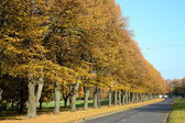 City and nature. Autumn trees by the road — Stock Photo
