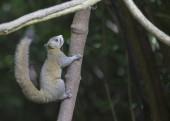 Beautiful Squirrel — Stock Photo