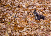 Squirrel Amongst The Leaves — Stock Photo