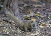 Lindo esquilo — Foto Stock