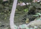 Güzel sincap — Stok fotoğraf