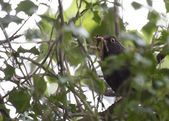 Blackbird eating on worms — Stock Photo