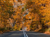 The sun, fall, wood, road and the house. — Stock Photo