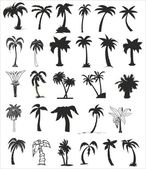 Vector silhouettes of palm trees — Stock Vector