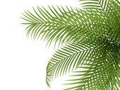 Tropical plant — Stock Photo