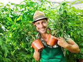 Farmer shows with passion his beloved plants — Stock Photo
