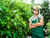 Happy farmer pruning plants in a greenhouse — Stock Photo