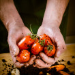 Hands with biological vegetables — Stock Photo #74873377