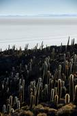 Cactus, Incahuasi island — Stock Photo