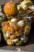 The bascket with small gourds — Stock Photo