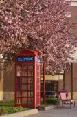 Blooming telephone booth — Stock Photo