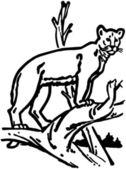 Mountain Lion — Stock Vector