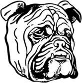 Bulldog — Stock Vector