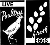 Live Poultry — Stock Vector