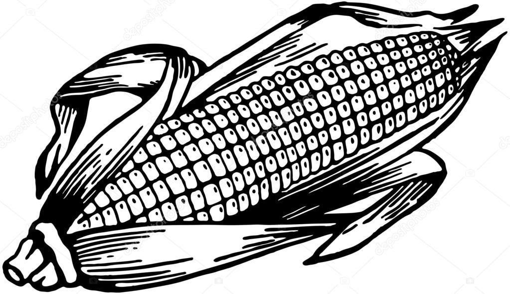 mazorca de ma u00edz archivo im u00e1genes vectoriales ear of corn clipart Corn Plant Clip Art