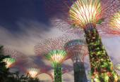 Gardens by the bay Supertree Grove Singapore — Stock Photo