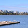 St Kilda Albert Park Melbourne — Stock Photo #56450447