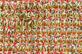 Bromeliad vertical gardening. — Stock Photo