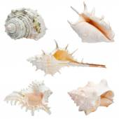 Set of sea shells isolated — Stock Photo
