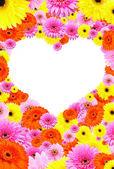 Background of gerbera flower create a frame — Stock Photo