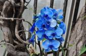 The flowers are blue orchid — Stock Photo