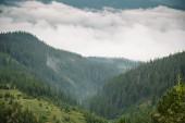 Fairytale Forest - Sunbeams in Carpaty — Foto Stock
