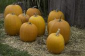 Pumpkins on a bed of straw — Stock Photo