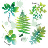 Set of beautiful watercolor green leaves on white background. — Stock Vector