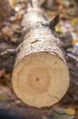 Broken tree  — Stock Photo