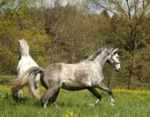 Horses outside on meadow — Stock Photo