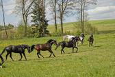 Koně venku na louce — Stock fotografie