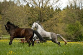 Horses outside on meadow — Stock Photo