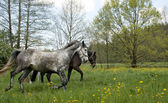 Horses outside on meadow — Stockfoto
