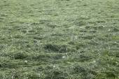 Harvesting hay mowed grass — Stock Photo