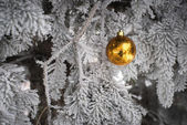 Snow covered fir tree with toy ball — Stock Photo